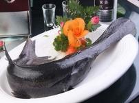 鸭嘴鱼的图片