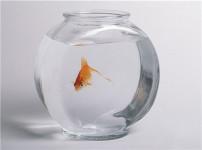 鱼缸的图片
