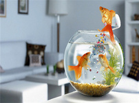 鱼缸风水的图片