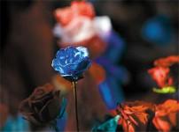 蓝色妖姬的图片