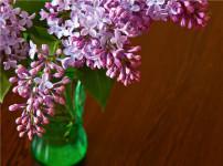 丁香花的图片
