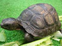 象龟的图片