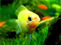 金波子鱼的图片
