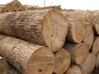 橡木的图片