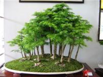盆栽的图片