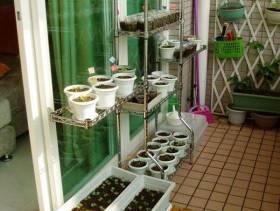 现代简约风格阳台花园装修图片-现代简约风格阳台花架图片