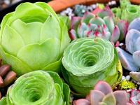 植物布景点亮家居装饰 多肉植物DIY技巧
