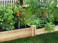 小庭院设计的几个要素,很重要哦!