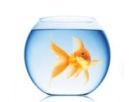 家居养鱼也有风水讲究  你知道吗?