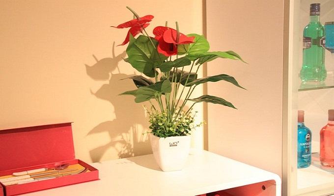 家居风水之客厅植物摆放