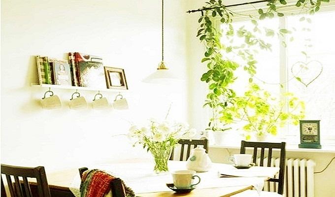 新装修的房子摆放什么植物