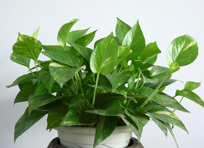 厨房植物摆放风水有讲究,这样做才有财运