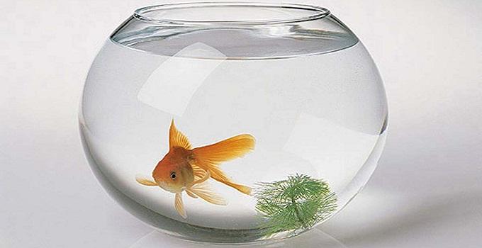 金鱼缸摆放位置 选对位置利财运
