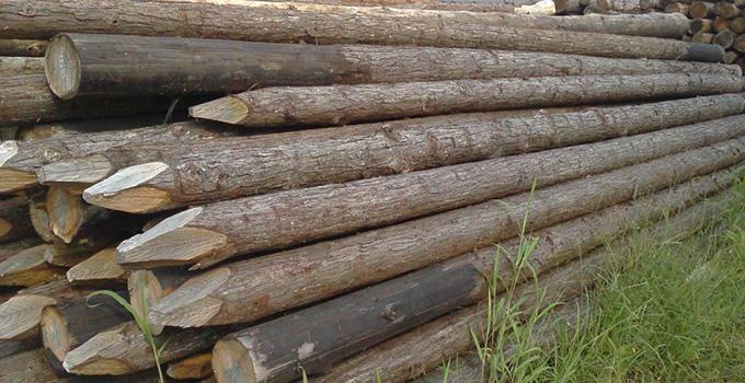 常见的木材种类分类有哪些?小编为您理一理
