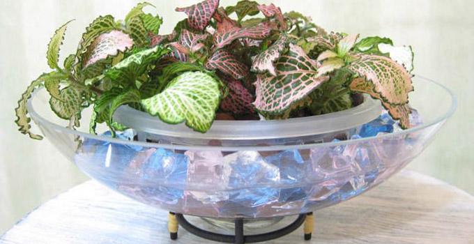 室内装饰技巧之水培花卉