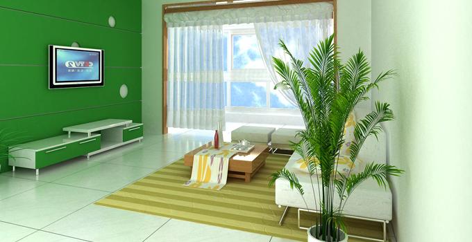 新房必备的绿色植物大集合 总有一款适合你