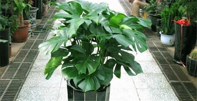 简约风格,健康生活:选这几款室内植物准没错