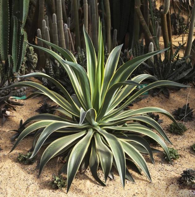 净化空气的植物排行榜