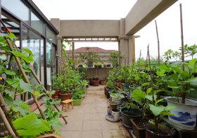 现代菜园花园实景